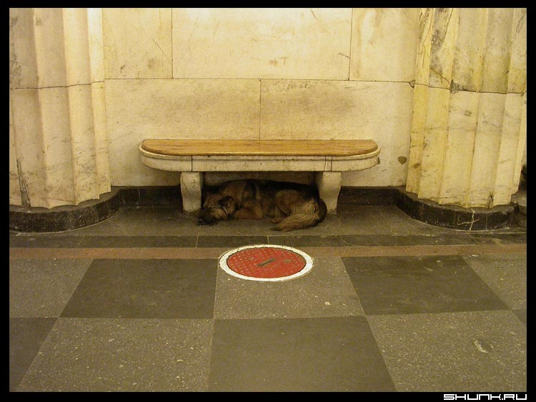 Люк - люк собака лавочка метро фото фотосайт