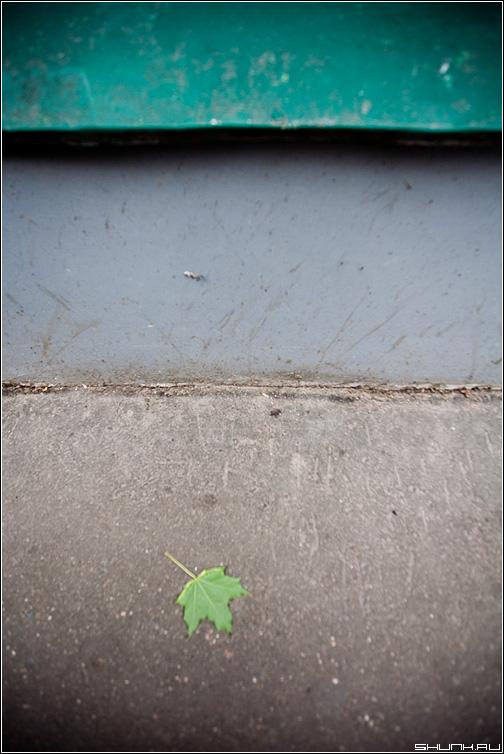 Кленовый лист - лист клен улица здание асфальт фото фотосайт