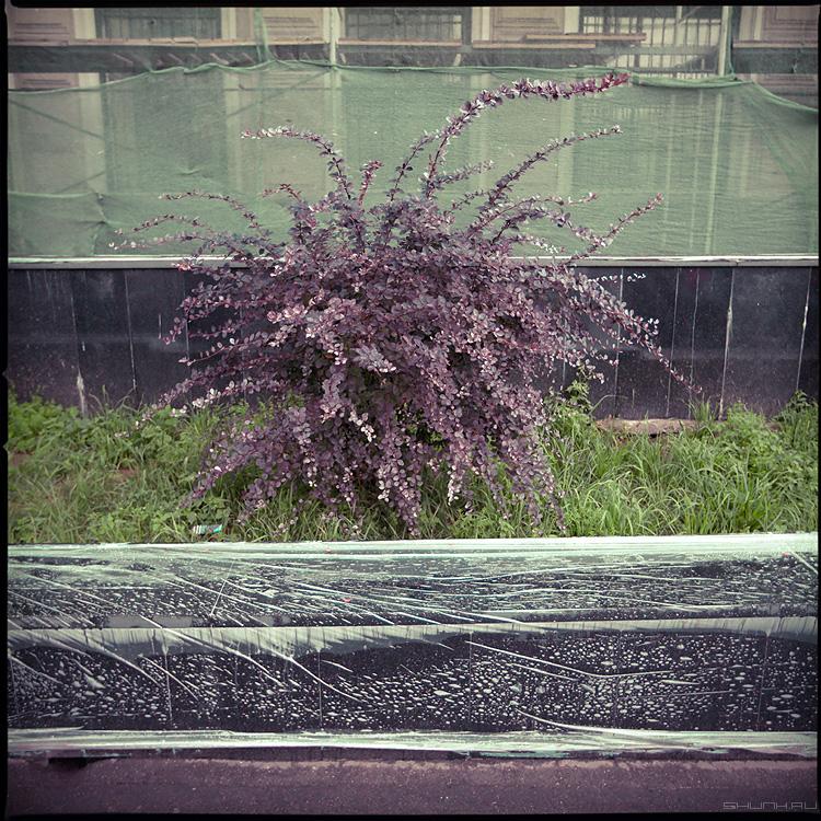 Куст - куст улица дождливо дождь пленка сетка среднийформат фото фотосайт
