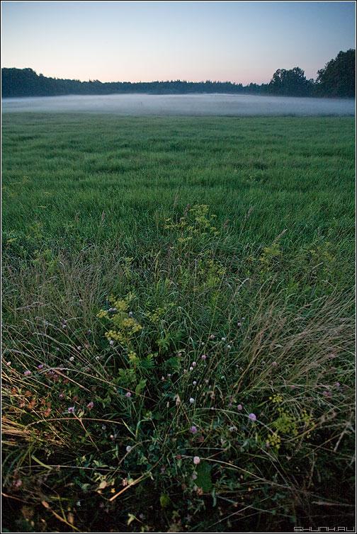 Туманность - астрономия поле деревня поле травинки туман фото фотосайт