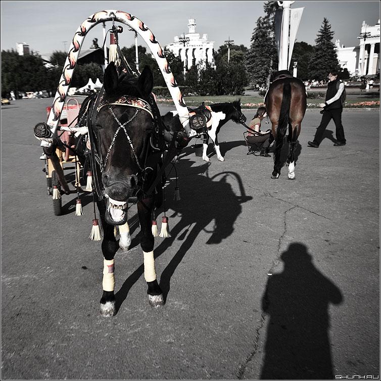 Лошадиная фамилия - лошадь квадратное живность зубы вднх тень фото фотосайт