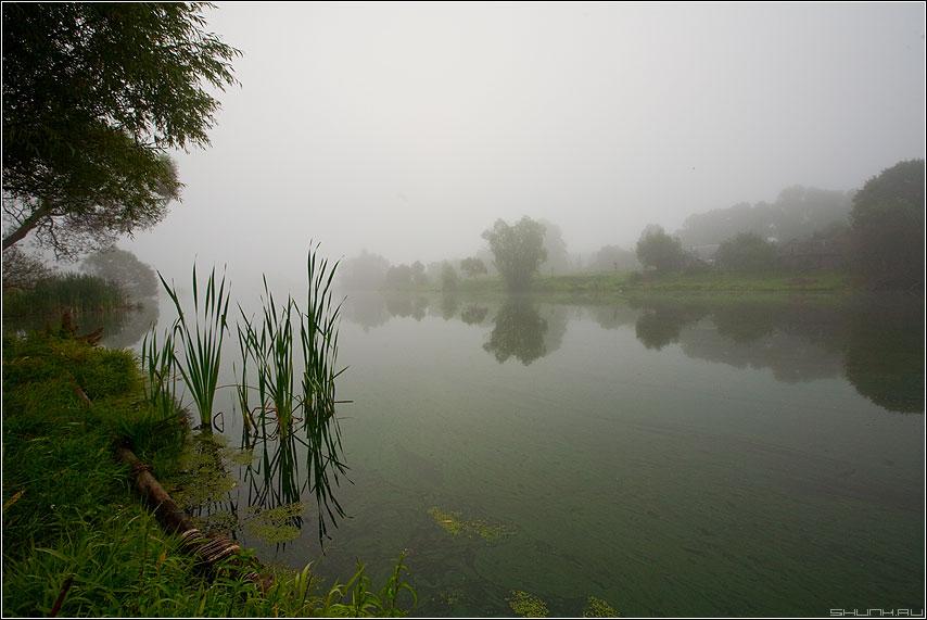 Шустиковский пруд. Август. Утро. Туман. - туман пруд рогоз камыш утро деревня цветное фото фотосайт