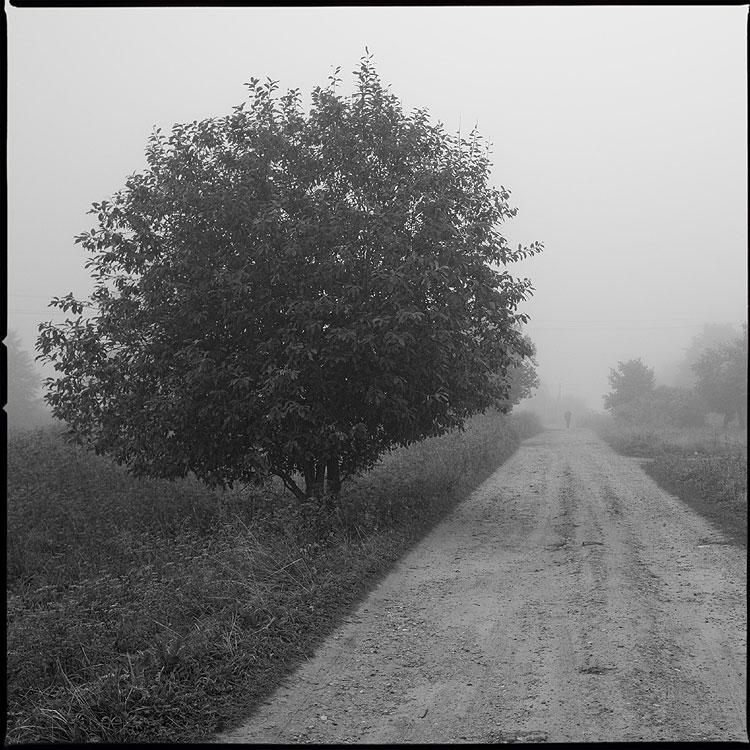 Утро. Один. - деревня квадратное средний формат чёрнобелое дерево дорога шустиково фото фотосайт