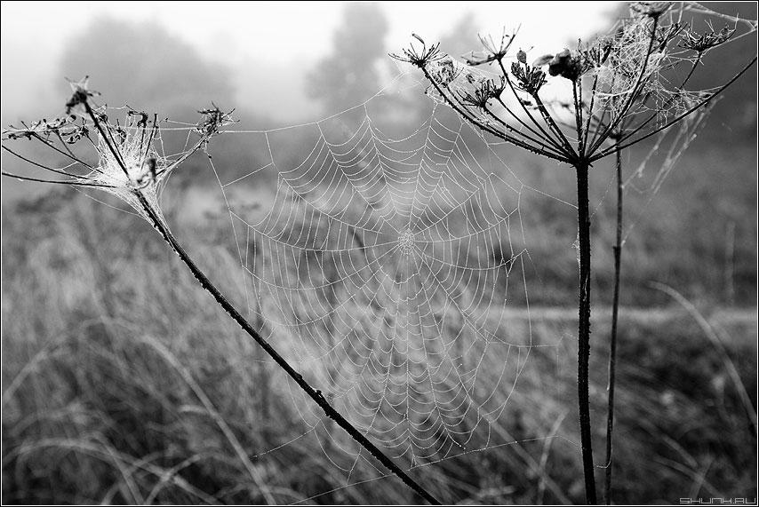 Паутинко 2 - паутина чернобелое деревня природа растение семена фото фотосайт