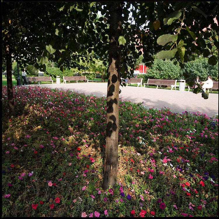 Городская ... - дерево тени бульвар цвет квадратное фото фотосайт