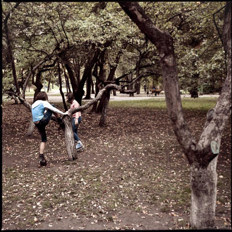 За яблоками - ролики яблони яблоневыйсад дети осень парк фото фотосайт