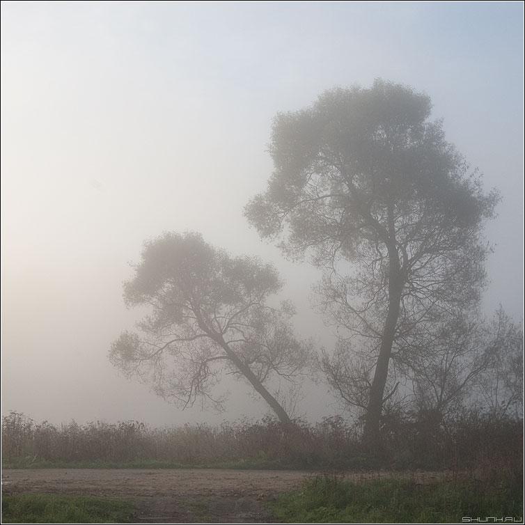 Туманный фрактал - туман деревня осень фрактал ветви утро холод фото фотосайт