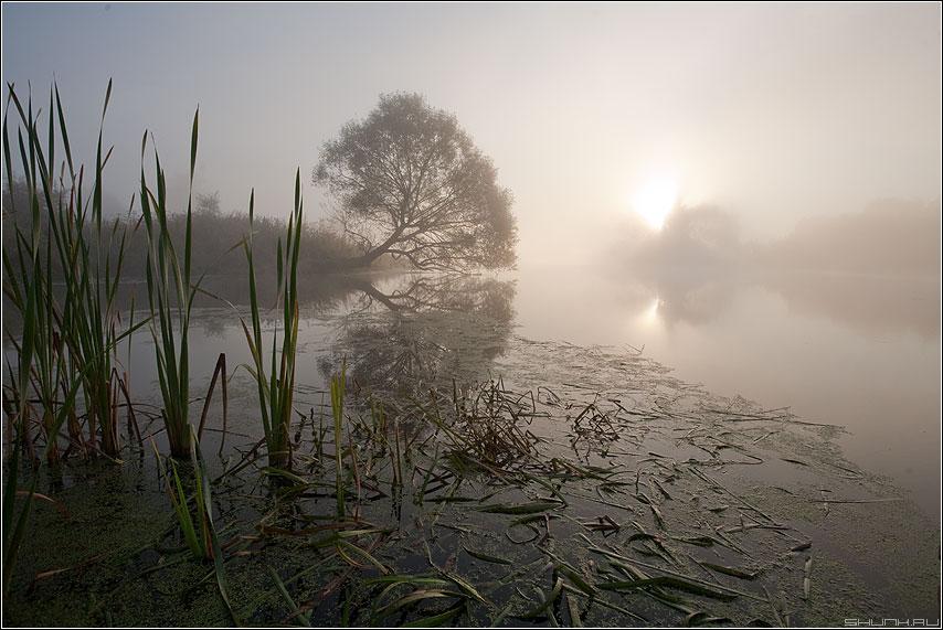 Туманное утро - утро осень туман пруд шустиково прохладно фото фотосайт