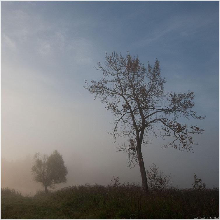 Все познается в сравнении - дерево квадратное туман деревня трава осеннее пейзаж фото фотосайт