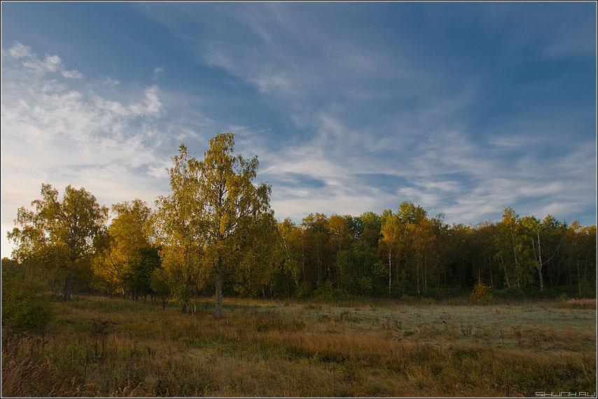 Один из видов д. Шустиково - осень березки вид небо деревня утро рассветное фото фотосайт