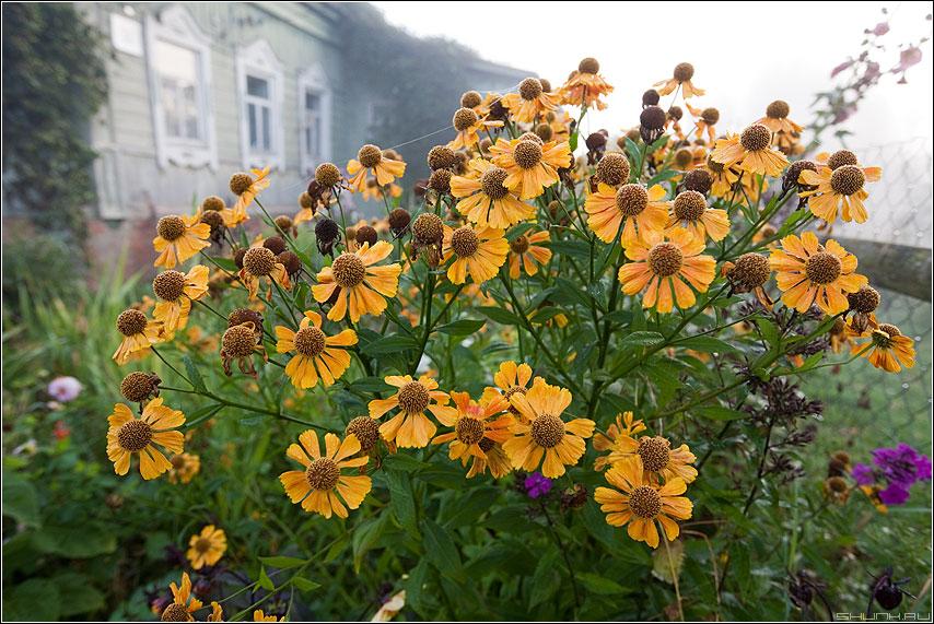 Цветочки у дома - цветочки деревня желтенькие утро домик фото фотосайт