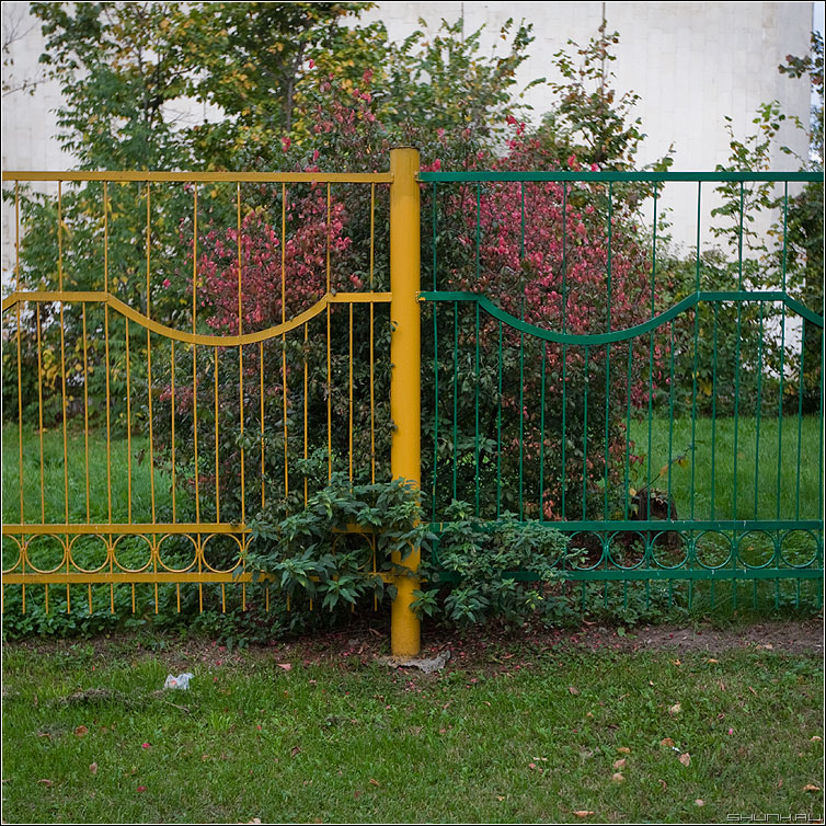 Осень за забором - осень забор куст желтозеленый квадратное фото фотосайт