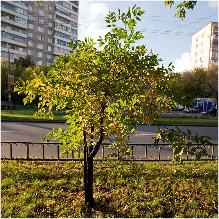 И, все таки, осень! - кустик деревце улица уличное здание прогулка квадратное фото фотосайт