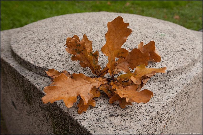 Атрибуты осени - дуб лист осень листья питер атрибут фото фотосайт