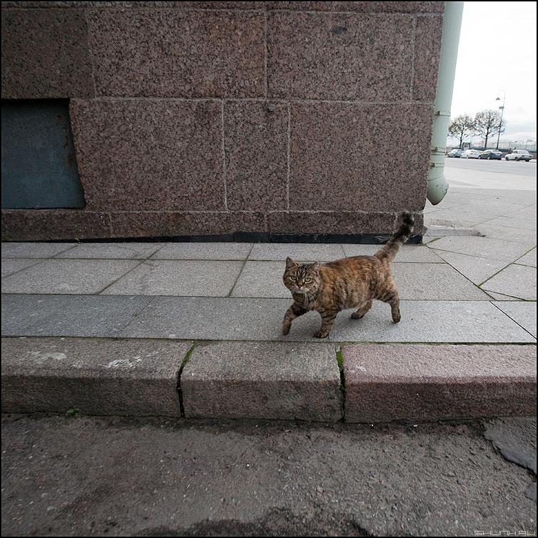 Котэ - живность кот водвор улица хвост рожа фото фотосайт