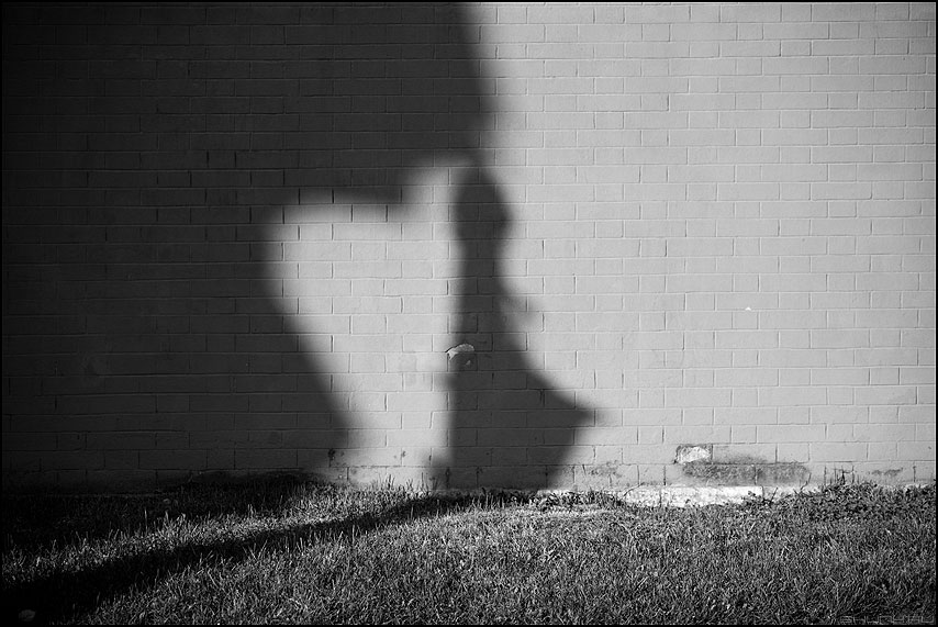 Утиные истории - тень тени стена кирпичики чёрнобелое уточка трава питер фото фотосайт