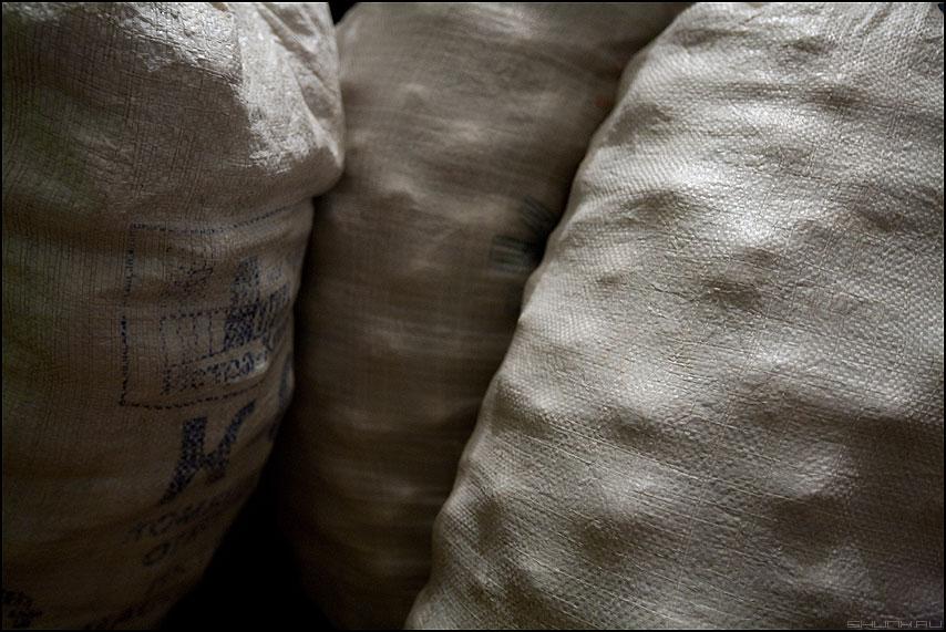 Три сестры - мешки картошка урожай элементы фото фотосайт