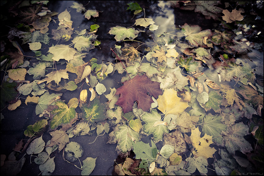 Про червячка - осень листва лужа обработка настроение фото фотосайт