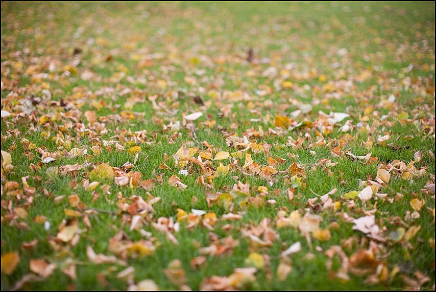 Ковер осени - трава листва осень ковер рабочийстол фото фотосайт
