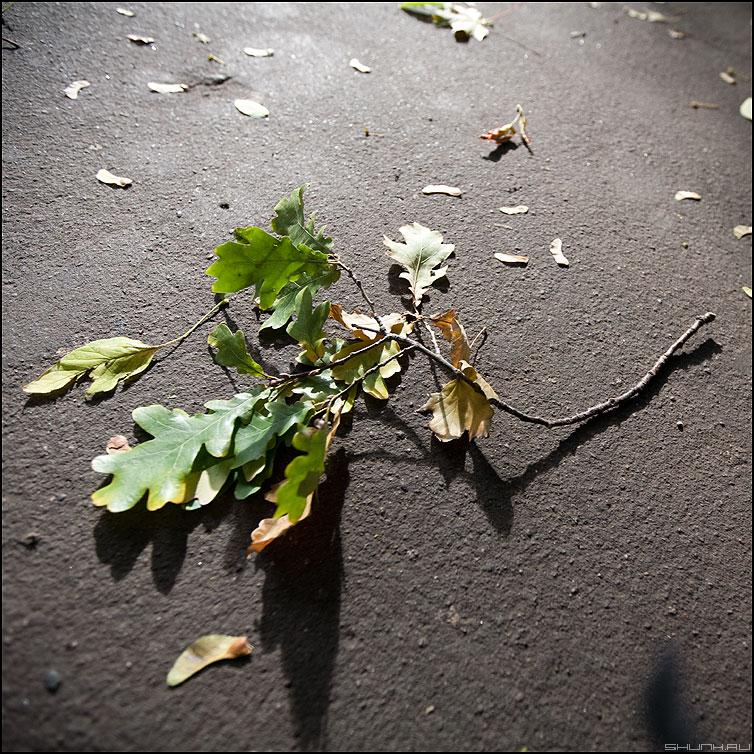 Дубок - доб веточка квадратное уличное свет фото фотосайт