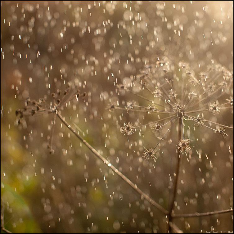 Сказочный дождик - дождь сказка капельки осень свет квадратное фото фотосайт