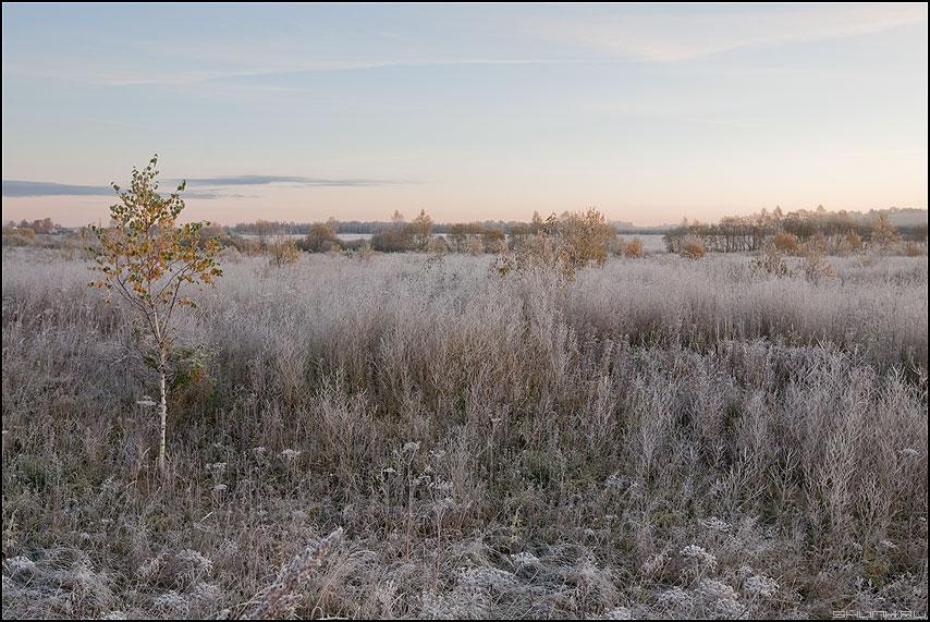 Пастельная осень - осень трава иней небо цвета пастель небо фото фотосайт