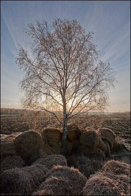 Во поле береза стояла - береза поле катушки солнце осень фото фотосайт