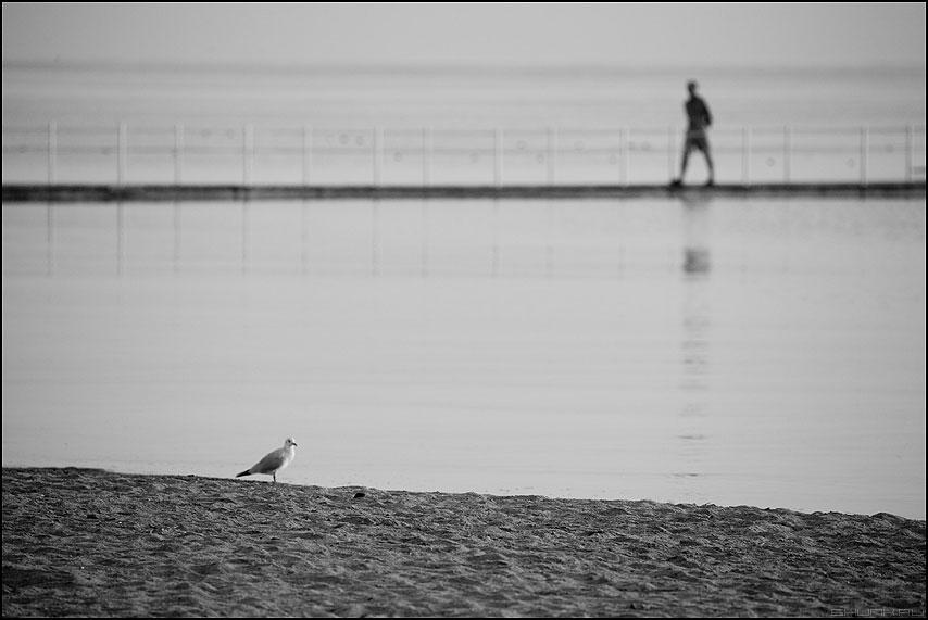Независимые переменные - море птица человек пирс отель египет фото фотосайт