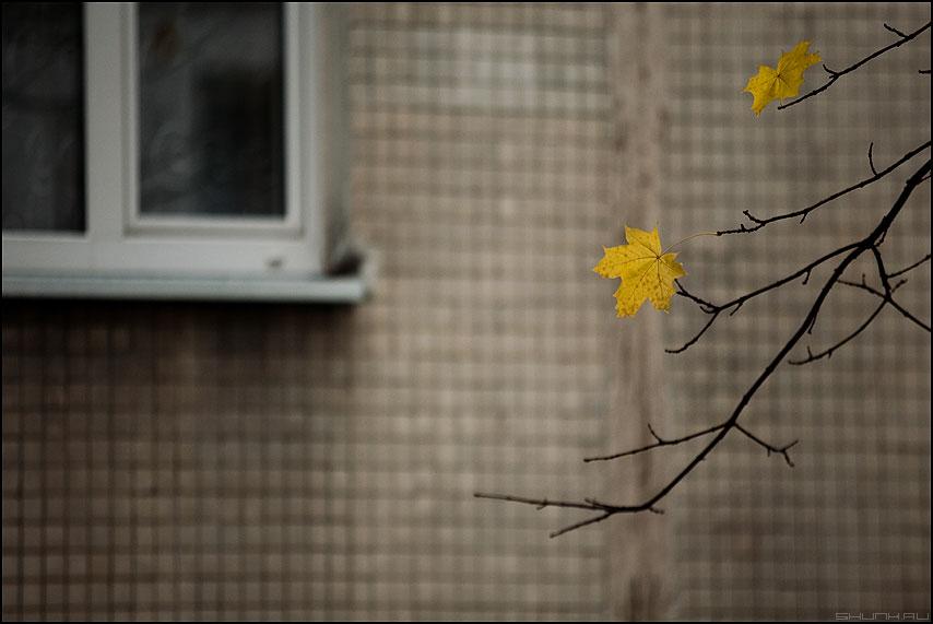 Золотая осень - осень листья листва веточка окно октябрь фото фотосайт