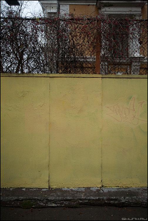 Слюсаревский забор - слюсарев забор желтый сетка веточки цветочки фото фотосайт