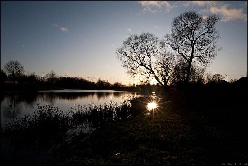 Краденое солнце - солнце пруд осень ноябрь деревня рогоз дерево отражение лучи фото фотосайт