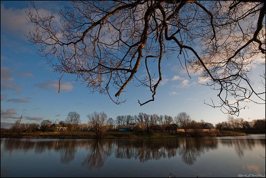 Фрактальные ветви - дерево берег пруд шустиково осень небо фото фотосайт