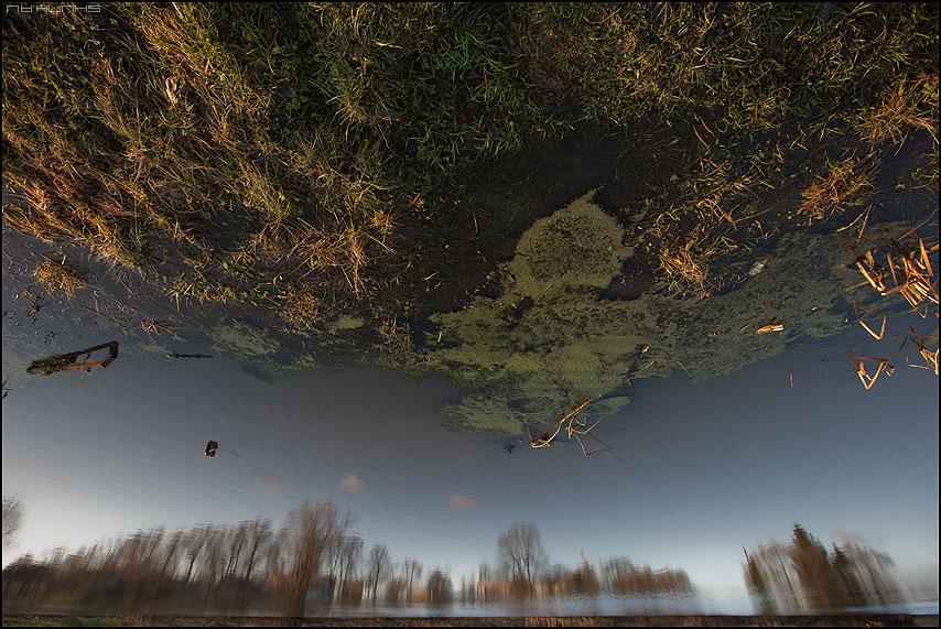Про зеленое небо - небо пруд деревья шустиково фото фотосайт