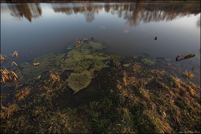 * * * - неназванная деревня пруд цветное водоросли отражение фото фотосайт