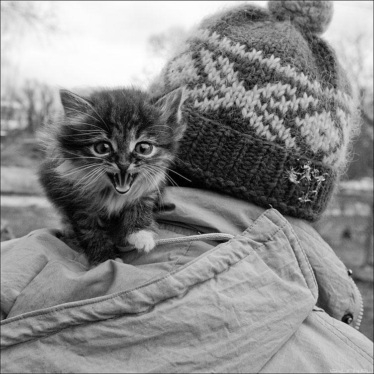 Мяу. - мяу котенок шапка квадратное деревня чёрнобелое фото фотосайт
