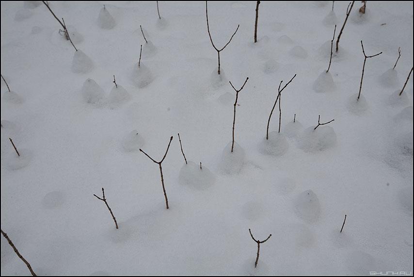 Снежное канапе - снег лес веточки деревца сугробики фото фотосайт