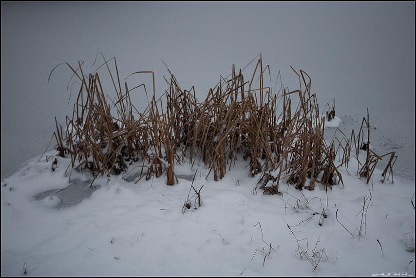 Под кустом - рогоз камыш пруд деревня зима снег лед фото фотосайт