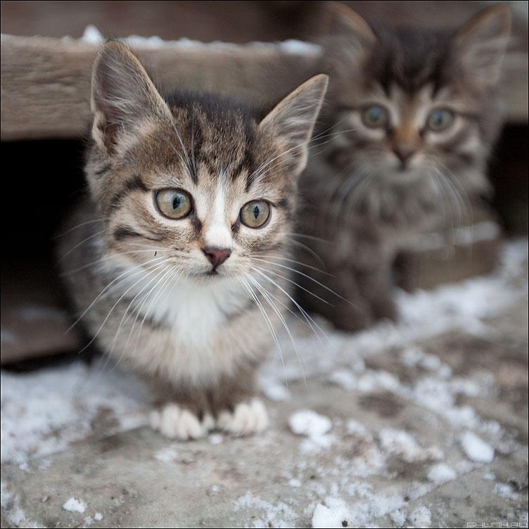 ...реакция на 16-35 - котэ кошки котята квадратное деревня фото фотосайт