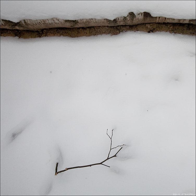 Березовая веточка - веточка снег бревно снег зима фото фотосайт