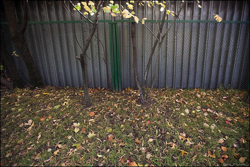 Осень у гаражей - осень деревья листва стена забор гаражи уличное фото фотосайт