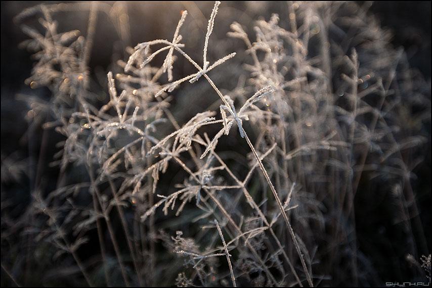 Морозное - травинки иней деревня макро фото фотосайт