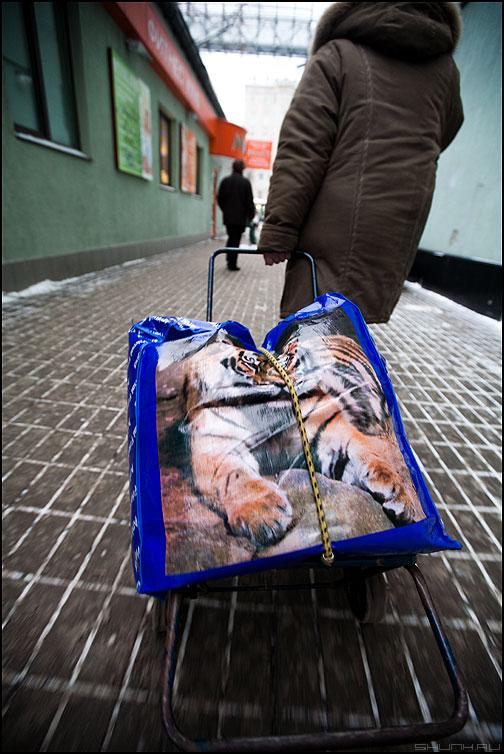 С наступающим ... - сновымгодом 2010 новыйгод новогоднее уличное год тигр годтигра фото фотосайт