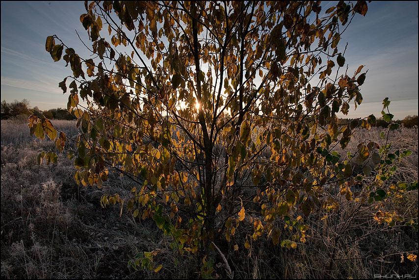 А в саду тропинка... - солнышко березка дерево небо россия фото фотосайт