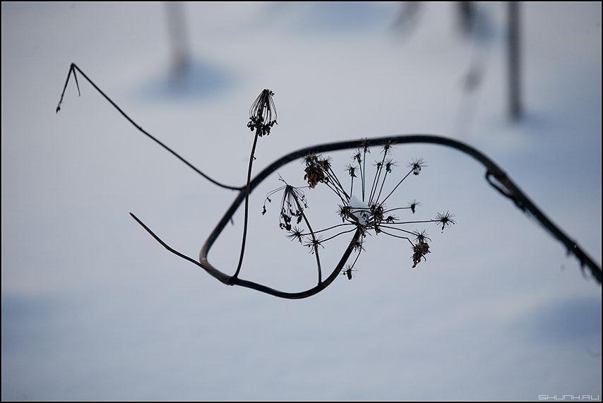 Закорючко - закорючка лес зима элемент травинка семяна снег снежное контрастное фото фотосайт