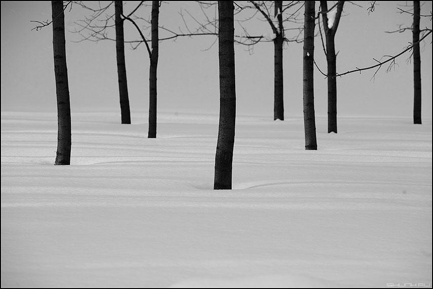 Теорема Жордана о плоских графах - теорема деревья снег дискретность стволы чёрнобелые фото фотосайт