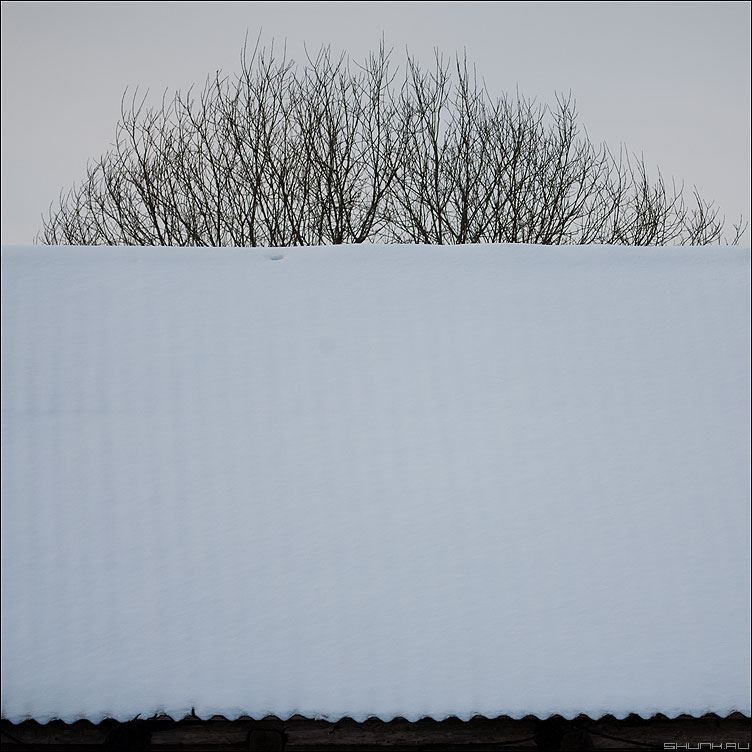 Зимний восход - крыша небо снег дерево ветви квадратное фото фотосайт