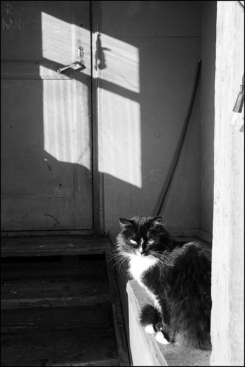 Кошка у окошка 2 - кошка тень окно деревня деревенское чёрноеибелое фото фотосайт