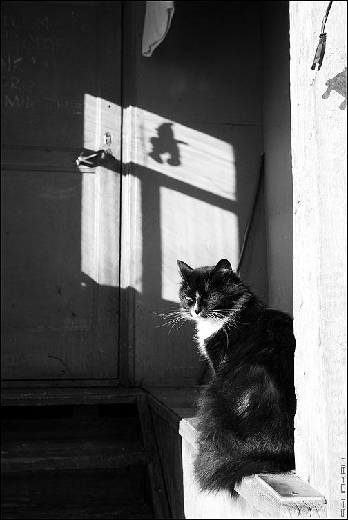 Кошка у окошка - кошка тень окно деревня деревенское чёрноеибелое фото фотосайт