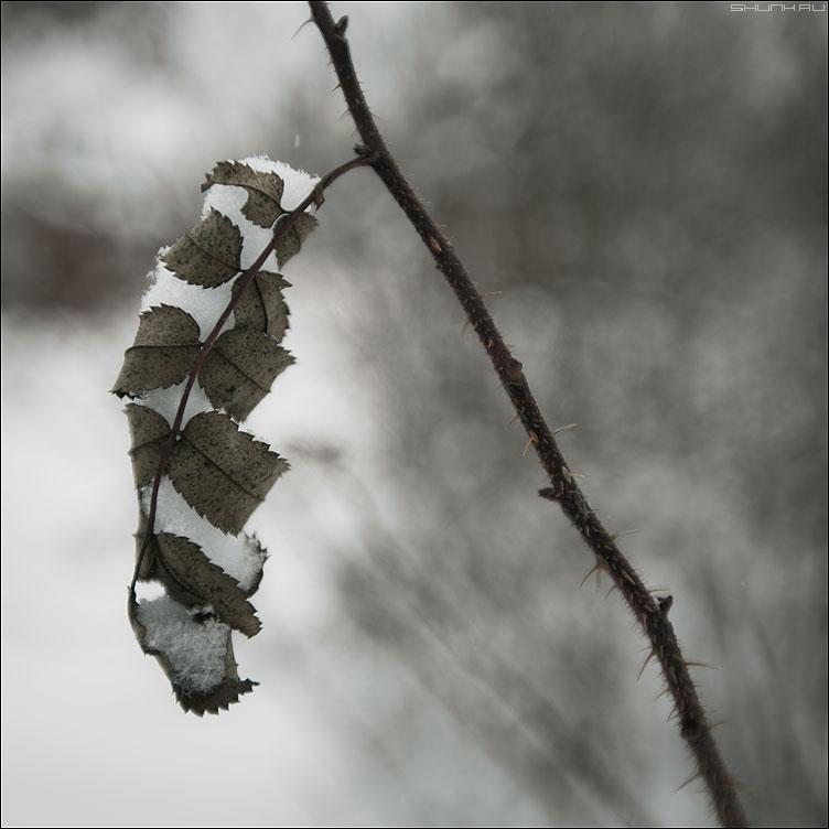 Сжимая снег - веточка снег квадратное природа фото фотосайт