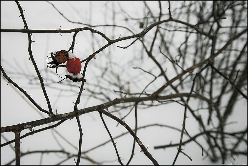 Ветраж - веточки ягодки зима красная природа фото фотосайт